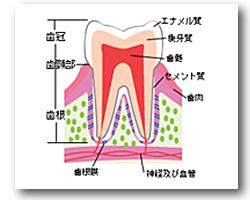 やの歯科 矯正歯科 出雲 歯医者 島根 斐川 インプラント 矯正