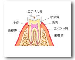 やの歯科 歯医者 島根 斐川 インプラント 矯正