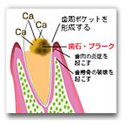 やの歯科 歯医者 斐川 島根
